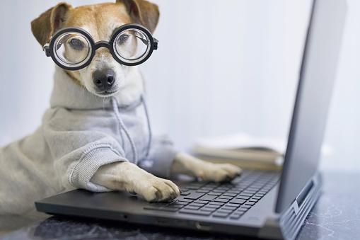 %gubitsCorrida de Galgos Corridas de Galgos Ganhar Dinheiro na internet Internet Negócios e Carreira